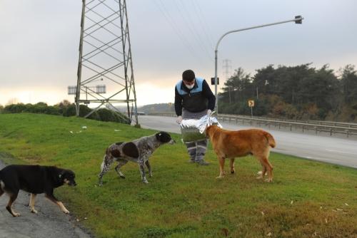 Sokak Hayvanlarına Her Gün Mama Desteği