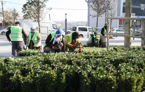 Arnavutköy 350 Bin Çiçekle Süslendi